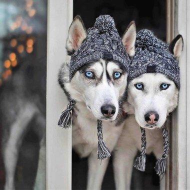 Зимна шапка за куче Canada Pooch CP01866 шапка за домашен любимец