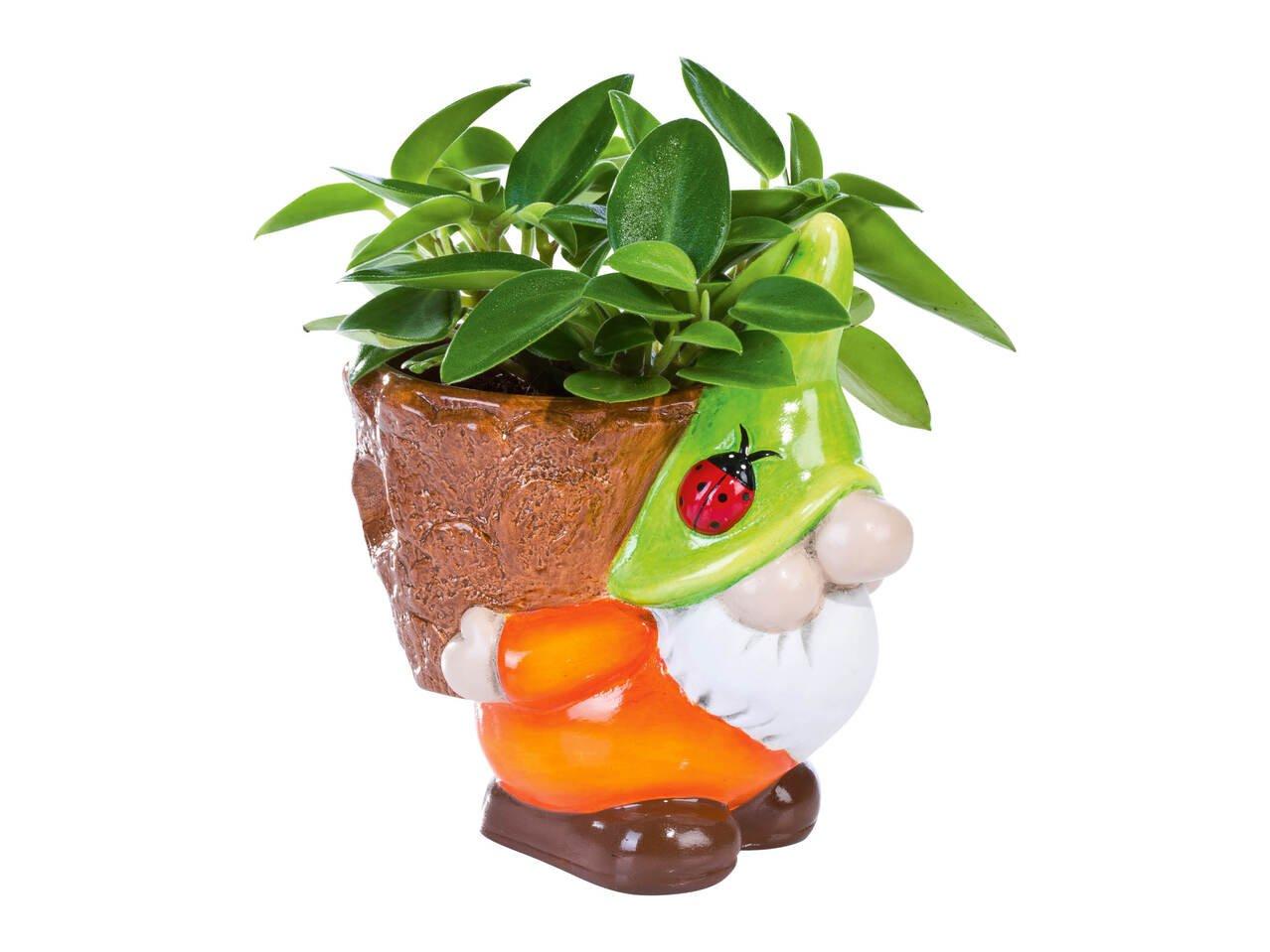 Зелени цъфтящи растения
